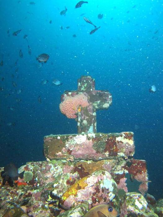 壁纸 海底 海底世界 海洋馆 水族馆 桌面 524_700 竖版 竖屏 手机